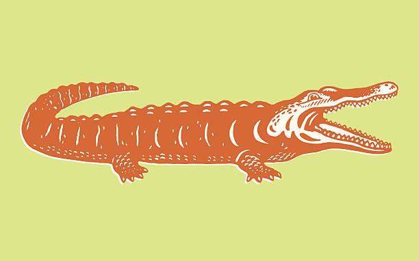 a cartoon image of an orange alligator on green background - crocodile stock illustrations