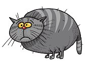 Cartoon image of fat cat. An artistic freehand picture.