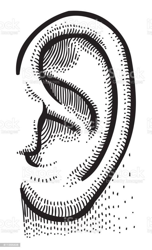 Vetores De Imagem Dos Desenhos Animados Do Ouvido Humano E Mais