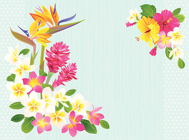Cartoon image of tropical flower background Tropical flowers (Bird of Paradise, Ginger, Hibiscus and Plumeria) on blue background. Vector.  frangipani stock illustrations