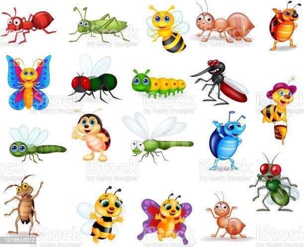 Cartoon insects collection set vector id1019842012?b=1&k=6&m=1019842012&s=612x612&h=m55p k44iwpo52diie2mehu 2zrhtzjvcvizq1q 9ca=