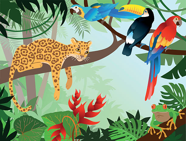 A cartoon jungle design with leopard, parrot, and Toucan Amazona Jungle with wild animals (parrot, toucan, frog and jaguar). amazon stock illustrations