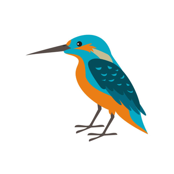Cartoon kingfisher icon on white background. Cartoon kingfisher icon on white background. Vector illustration. kingfisher stock illustrations