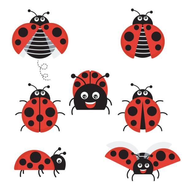 Cartoon ladybug vector set isolated from the background. Cute ladybug on a leaf or flying in a flat style – artystyczna grafika wektorowa