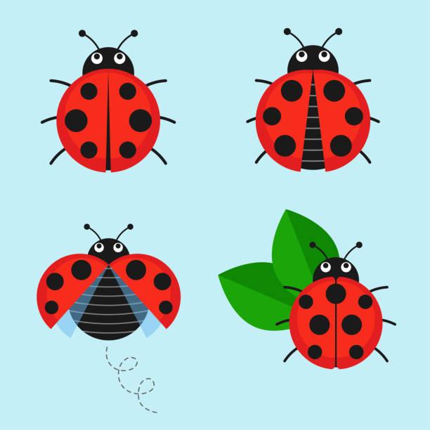 Cartoon ladybug vector set – artystyczna grafika wektorowa
