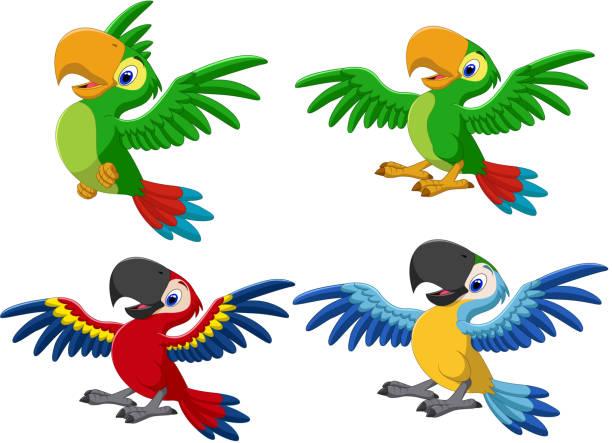 ilustrações de stock, clip art, desenhos animados e ícones de cartoon macaw collection set - arara