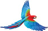 vector file of macaw parrot flying, eps10 file, transparency used.