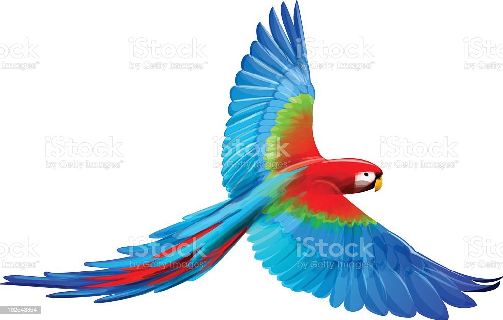 A cartoon Macaw with its wings spread out vector art illustration
