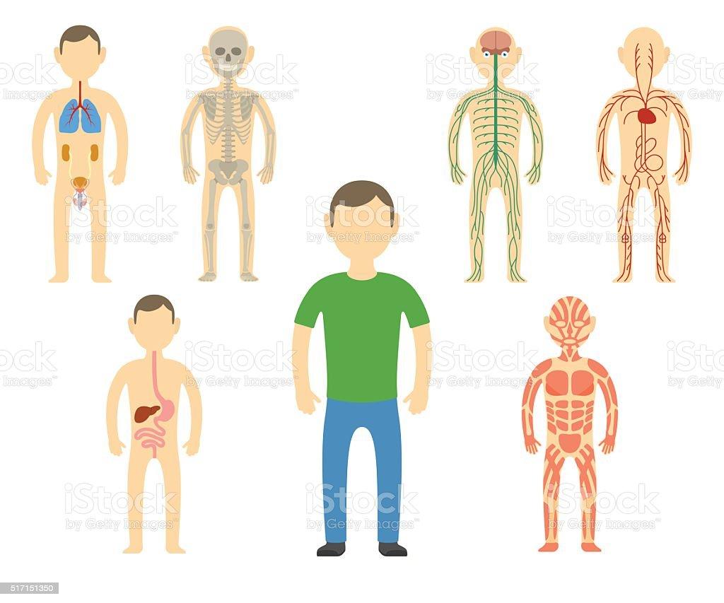 Cartoon man body anatomy. vector art illustration