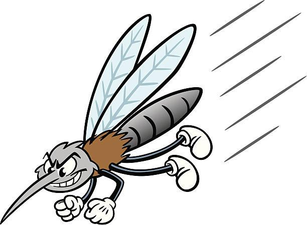 Cartoon Mosquito vector art illustration