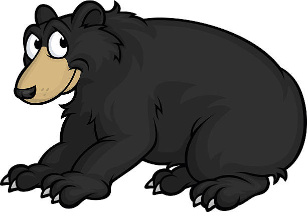 Best American Black Bear Illustrations, Royalty-Free ...