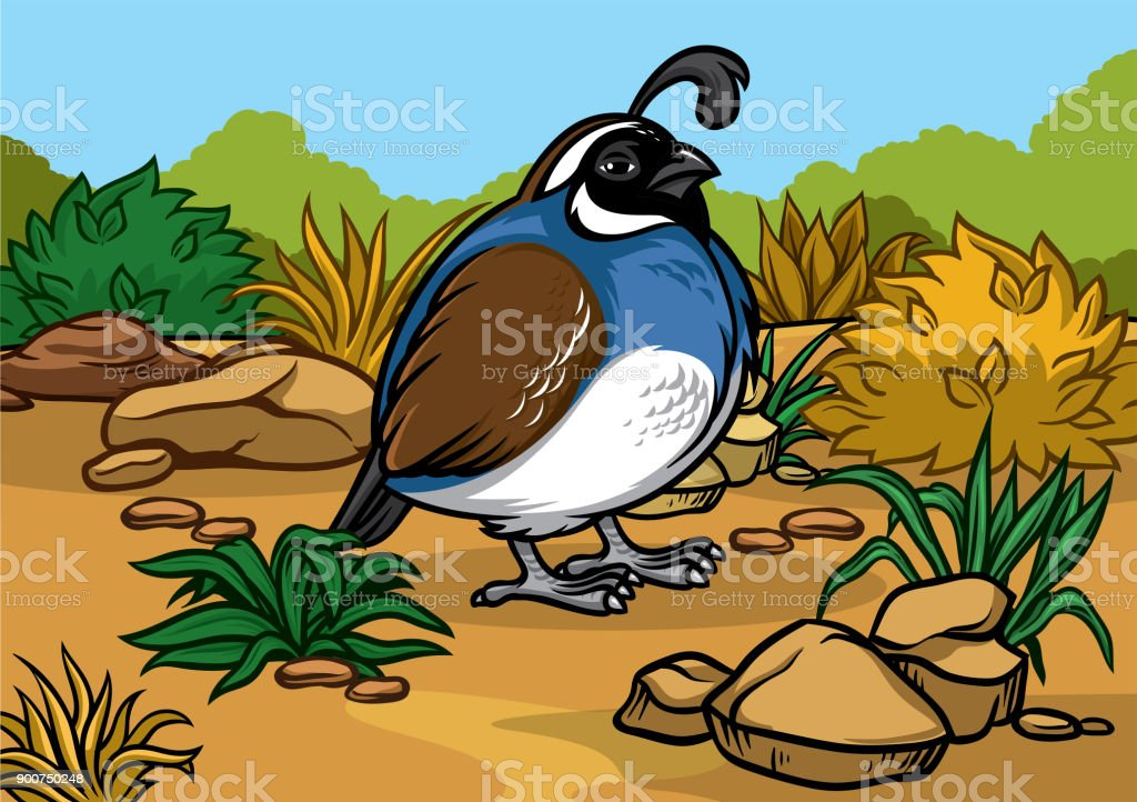 cartoon of california quail bird in the nature vector art illustration