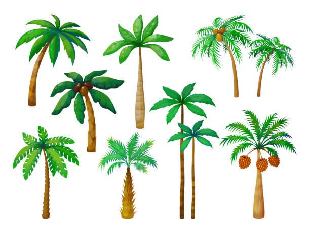 illustrations, cliparts, dessins animés et icônes de arbre de palmier de dessin animé. palmiers de jungle avec des feuilles vertes, palmiers de plage de noix de coco isolé vecteur - palmier