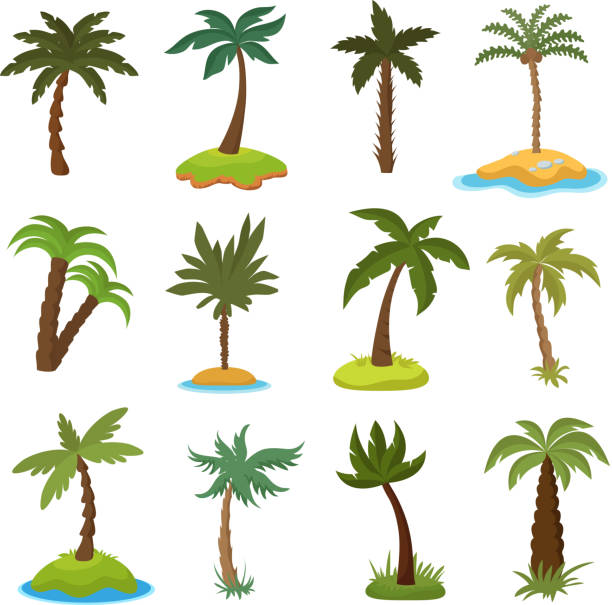 cartoon palm trees on tropical exotic islands vector set - palm tree stock illustrations