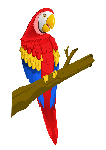 Cartoon parrot perched on a branch on white background