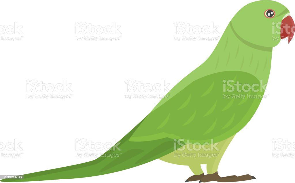 Vetores de Cartoon Parrot Vector Isolated Bird e mais