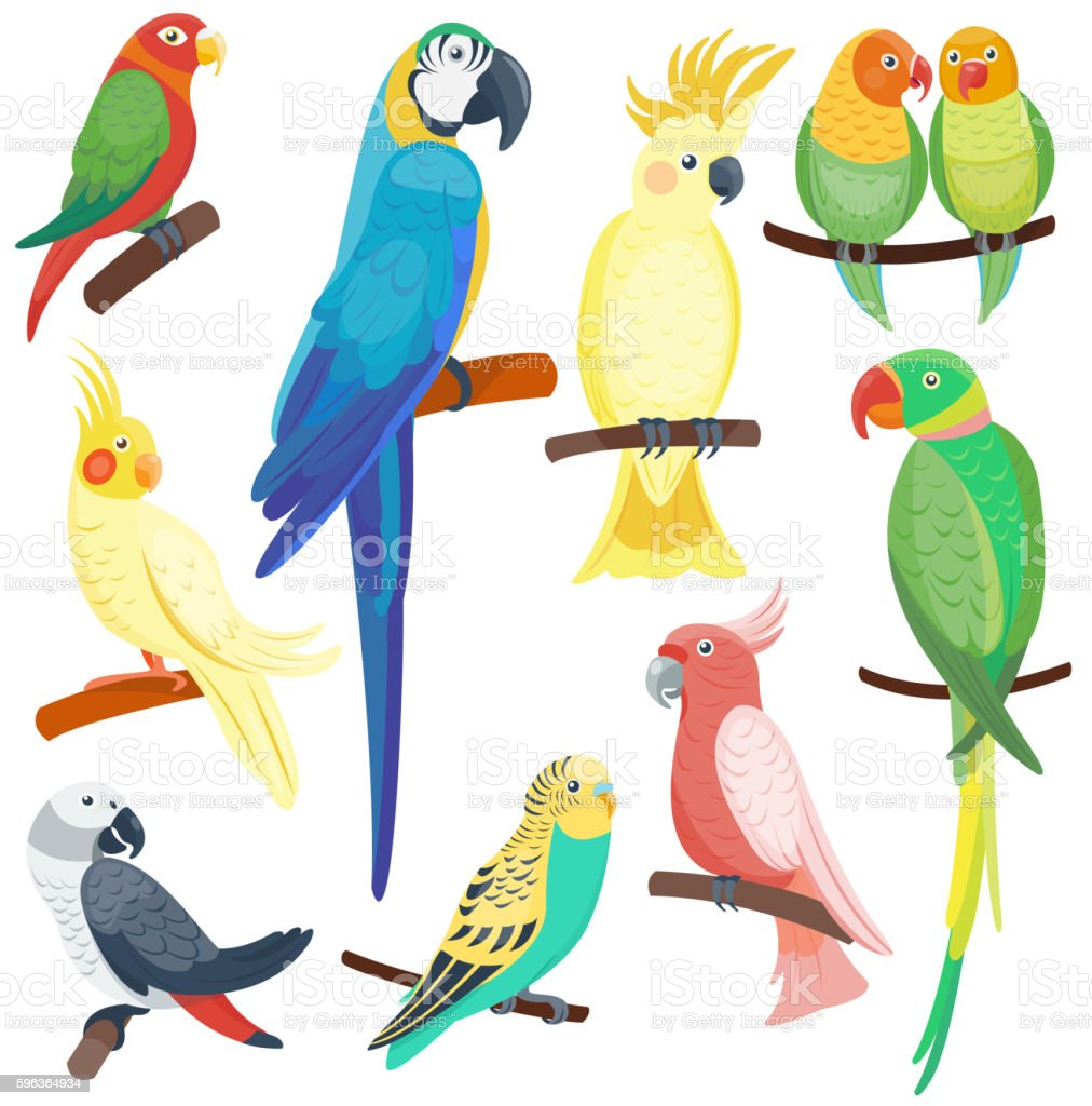 Cartoon parrots set vector royalty-free cartoon parrots set vector stock illustration - download image now