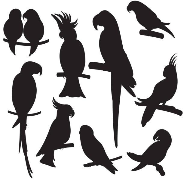 ilustrações de stock, clip art, desenhos animados e ícones de rapaz papagaios vector set - arara