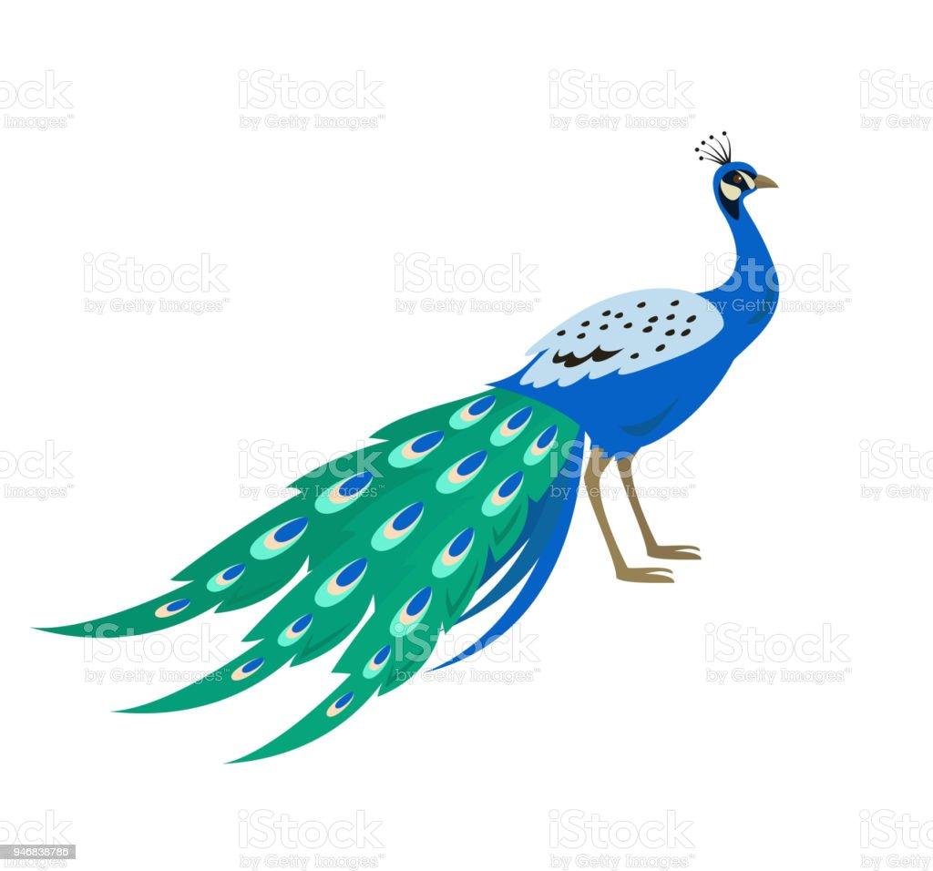 cartoon peacock icon on white background stock illustration download image now istock cartoon peacock icon on white background stock illustration download image now istock