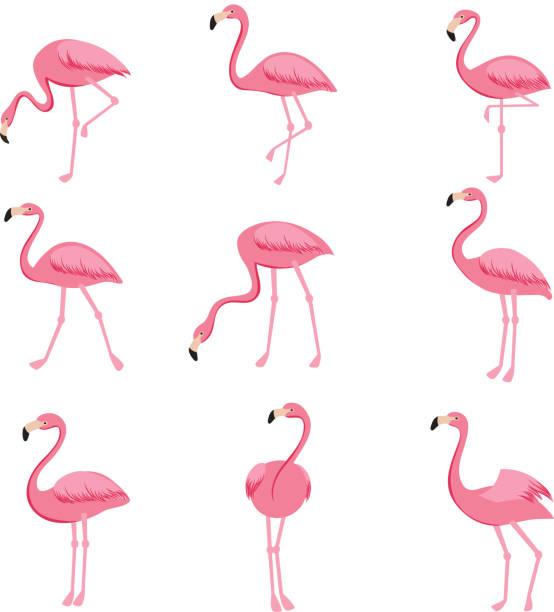 cartoon pink flamingo vector set. cute flamingos collection - flamingo stock illustrations