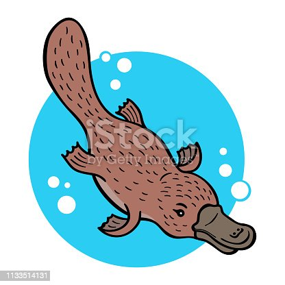 Cartoon platypus or duckbill; vector illustration