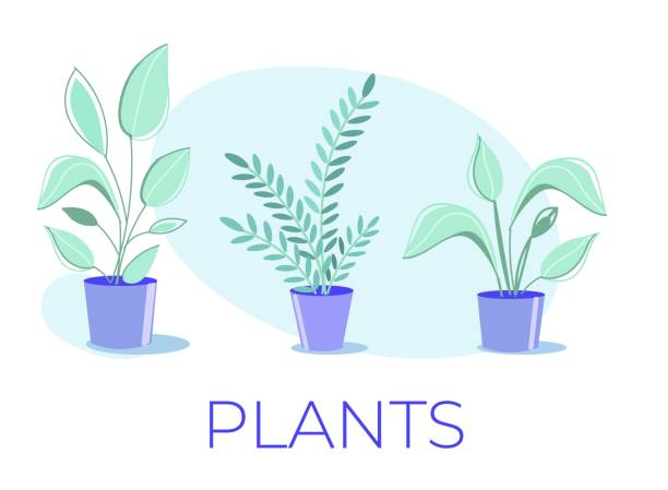 cartoon poster with potted house plants collection - jungle stock illustrations