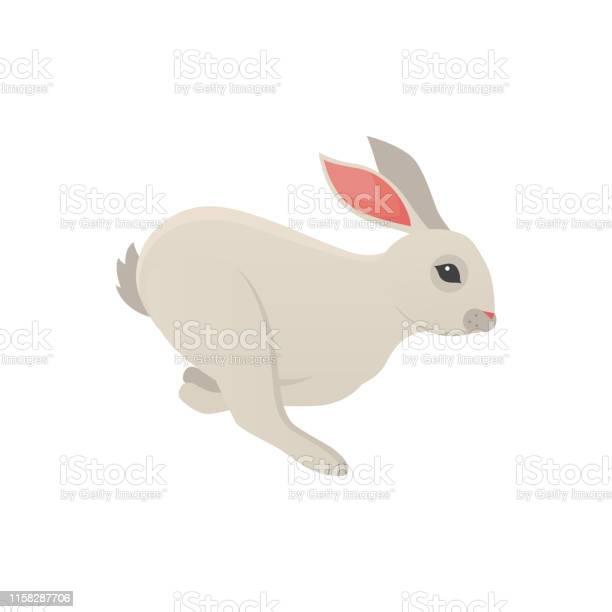 Cartoon rabbit vector isolated icon fine bunny pet vector id1158287706?b=1&k=6&m=1158287706&s=612x612&h=gnmcoreed4b ewbvapouw5 izrpe8iq40dy6gew 4n0=