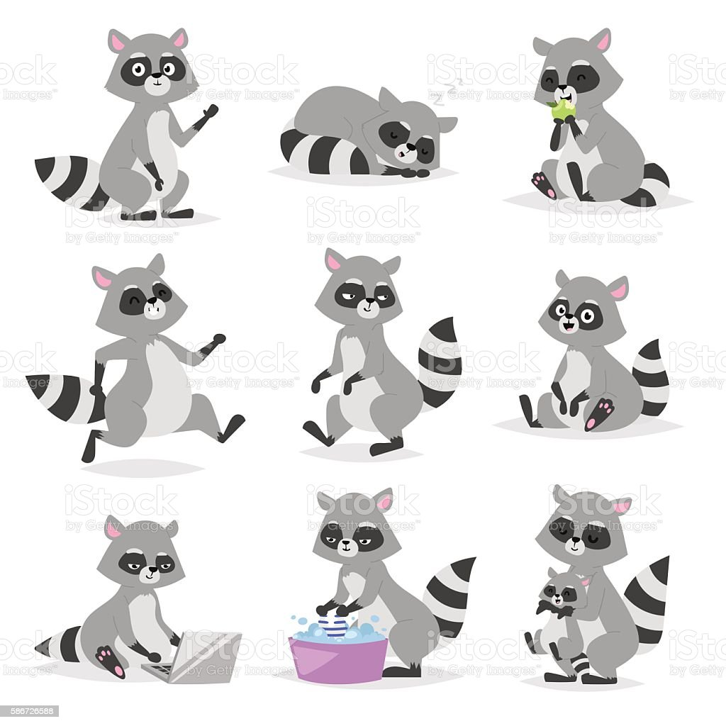 Cartoon raccoon vector illustration. royalty-free cartoon raccoon vector illustration stock illustration - download image now