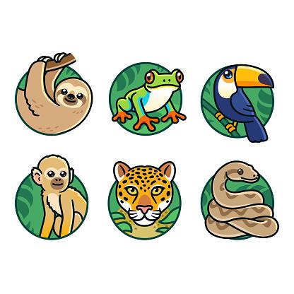 Cartoon rainforest animals set