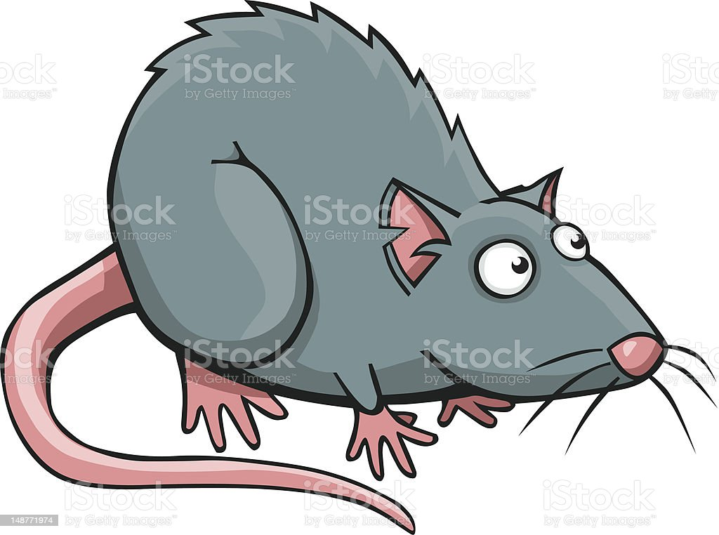 royalty free rat clip art vector images illustrations istock rh istockphoto com rat clipart black and white rat clip art free images