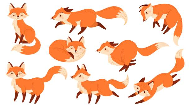 Cartoon red fox. Funny foxes with black paws, cute jumping animal vector illustration set Cartoon red fox. Funny foxes with black paws, cute jumping animal. Foxy character, predator fox mascot or wildlife forest animal mammal. Isolated vector illustration icons set fox stock illustrations