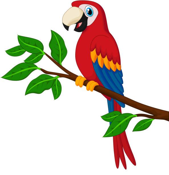 ilustrações de stock, clip art, desenhos animados e ícones de mulher de vermelho papagaio de um ramo - arara