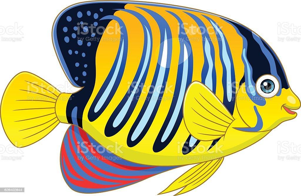 Royal Angelfish   Royalty Free Royal Angelfish Clip Art Vector Images Illustrations