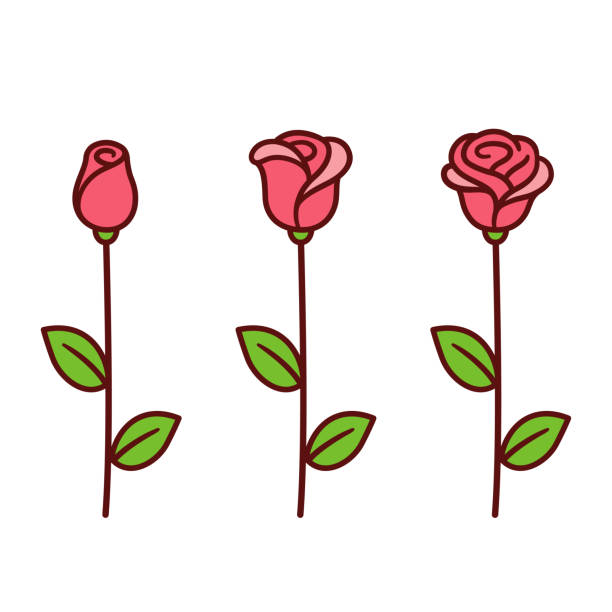 Cartoon rose set Cartoon style red rose icon set. Three stages of blooming, bud opening into beautiful flower. Hand drawn isolated vector clip art illustration. plant stem stock illustrations