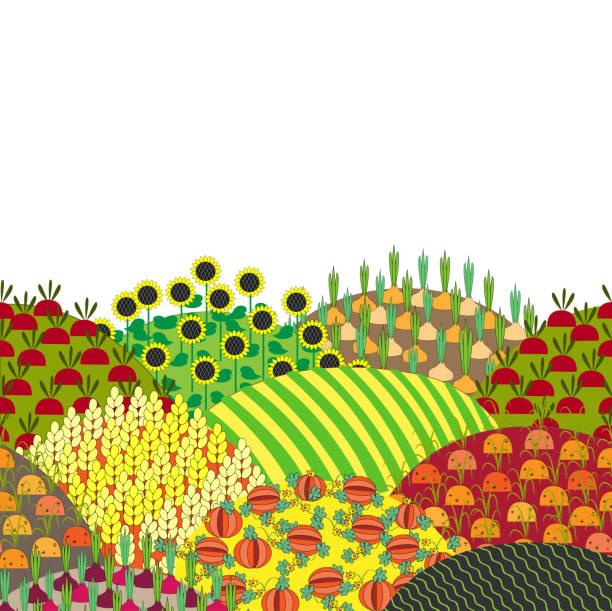 cartoon-ländlichen landschaft mit hügeln und feldern, vektor-illustration. - herbstgemüseanbau stock-grafiken, -clipart, -cartoons und -symbole