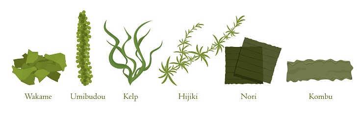 Cartoon seaweed set vector graphic illustration. Collection of natural algae marine plant colorful eat isolated on white background. Traditional japanese cookery food