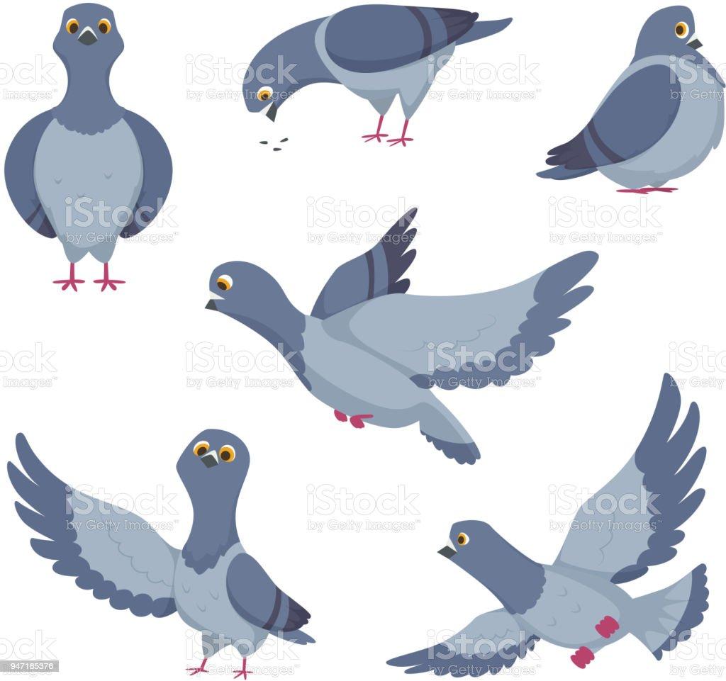 Ensemble De Pigeons Drôles De Dessin Animé Illustrations Doiseaux
