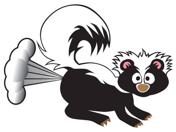 Cartoon Skunk Spraying A young skunk has been startled and is releasing his defensive spray skunk stock illustrations