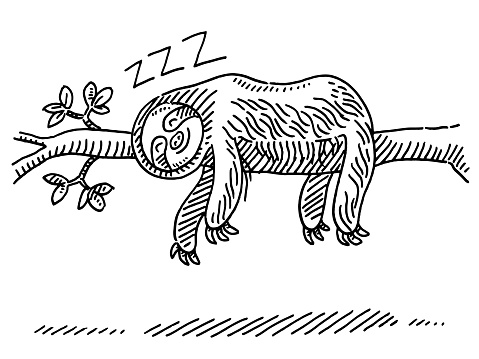 Cartoon Sloth Sleeping On Branch Drawing