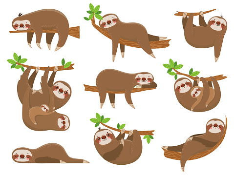Cartoon sloths family. Adorable sloth animal at jungle rainforest. Funny animals on tropical forest trees vector set