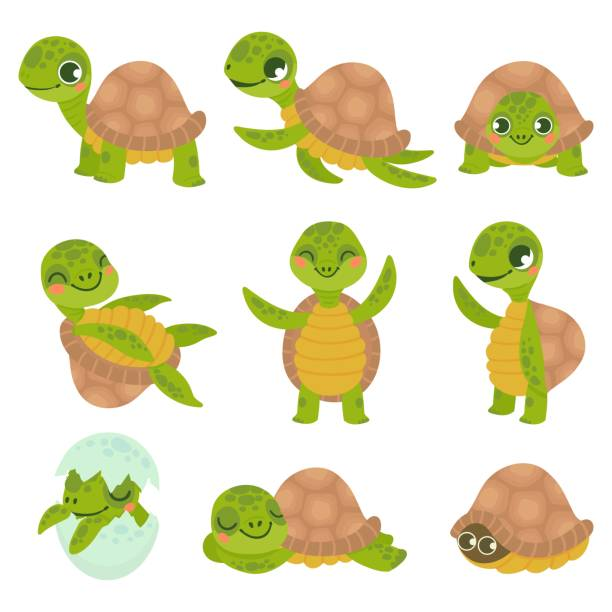 18 Turtle Cartoon Hiding In His Shell Illustrations Royalty Free