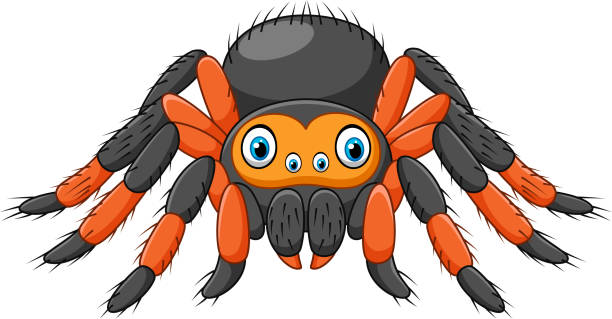 cartoon spider tarantula with red knees. danger animal - tarantula stock illustrations