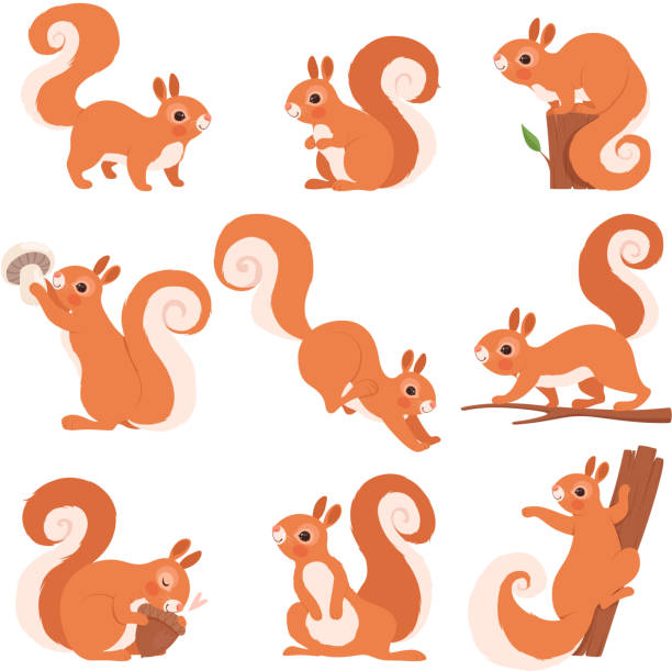 illustrations, cliparts, dessins animés et icônes de écureuil de dessin animé. animaux sauvages drôles de forêt courant restant et sautant la collection d'art de clip d'écureuil de vecteur - écureui