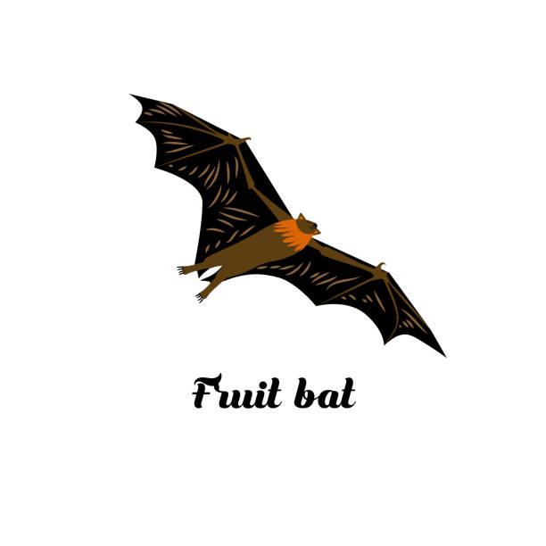 cartoon-stil-ikone des flying fox. - megabat stock-grafiken, -clipart, -cartoons und -symbole