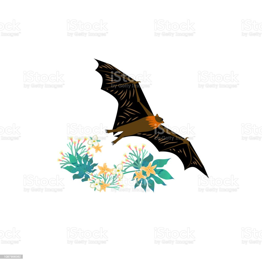 Vector illustration. Cartoon style icon of flying fox with tropical...