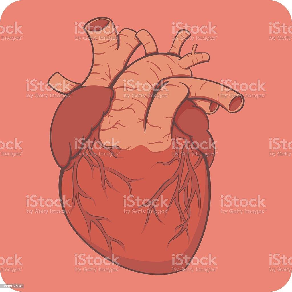 Cartoon style layered vector illustration - bright colored naturalistic human vector art illustration