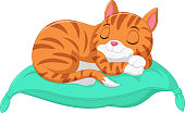 Vector illustration of Cartoon the cat is sleeping on a pillow