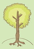Cartoon Tree Vector Illustration