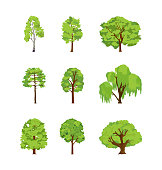 Cartoon trees differents birch poplar elm chestnut willow maple linden. Crown of the tree leaf for game design or landscape nature vector illustration isolated