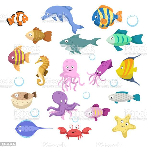 Cartoon trendy colorful reef animals big set fishes mammal and shark vector id887265630?b=1&k=6&m=887265630&s=612x612&h=mg1gmarph  nfq7qfhg b860zz5nf9tpujb3a3mm2t8=